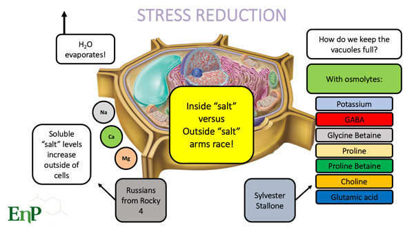 stress reduction for turf health