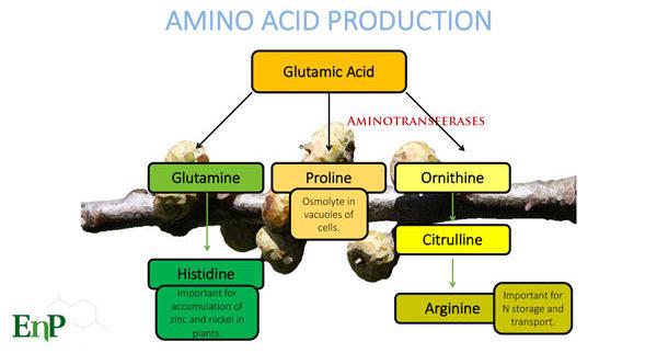 maximizing turf health with amino acids foliar pak