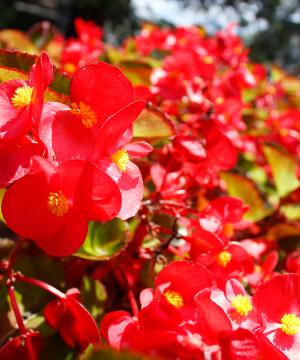 foliar-pak ultimate ornamental package