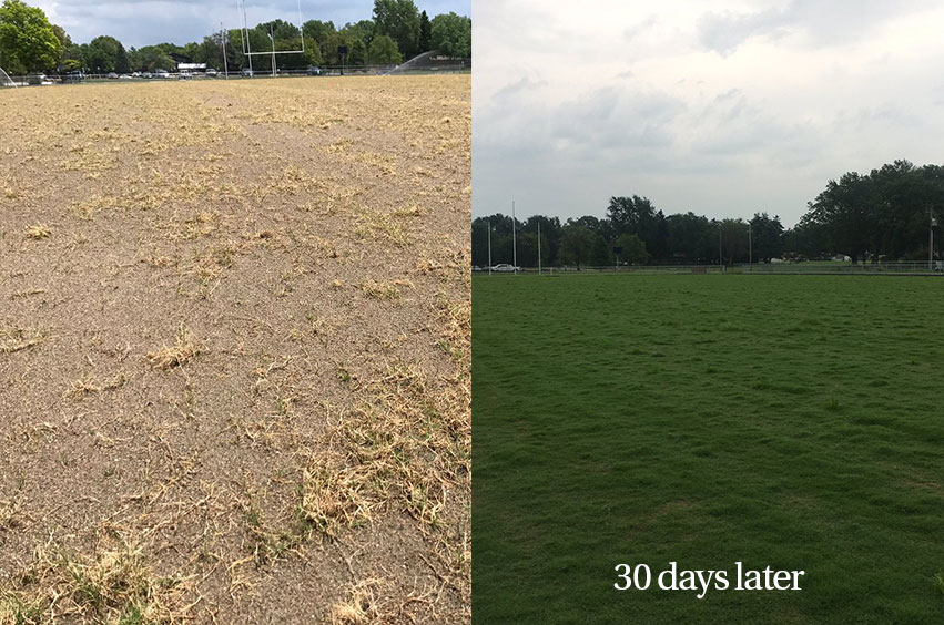 foliar-pak ultimate sports turf establishment program image