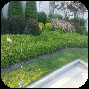 UOP after lawn & landscape