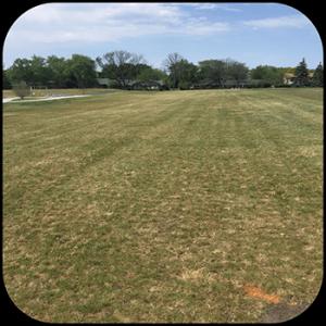 USTP Prospect Park Before lawn & landscape