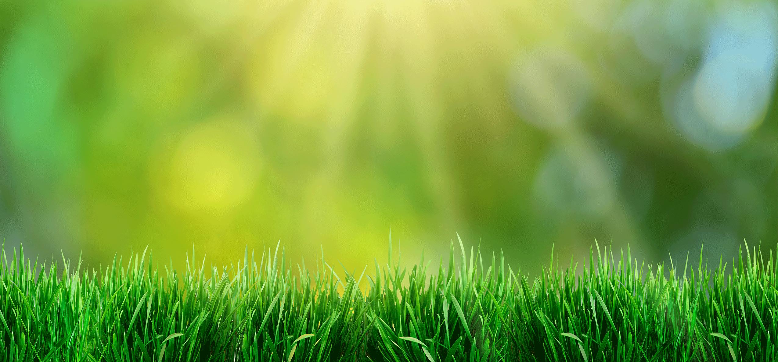 sunny turf in spring