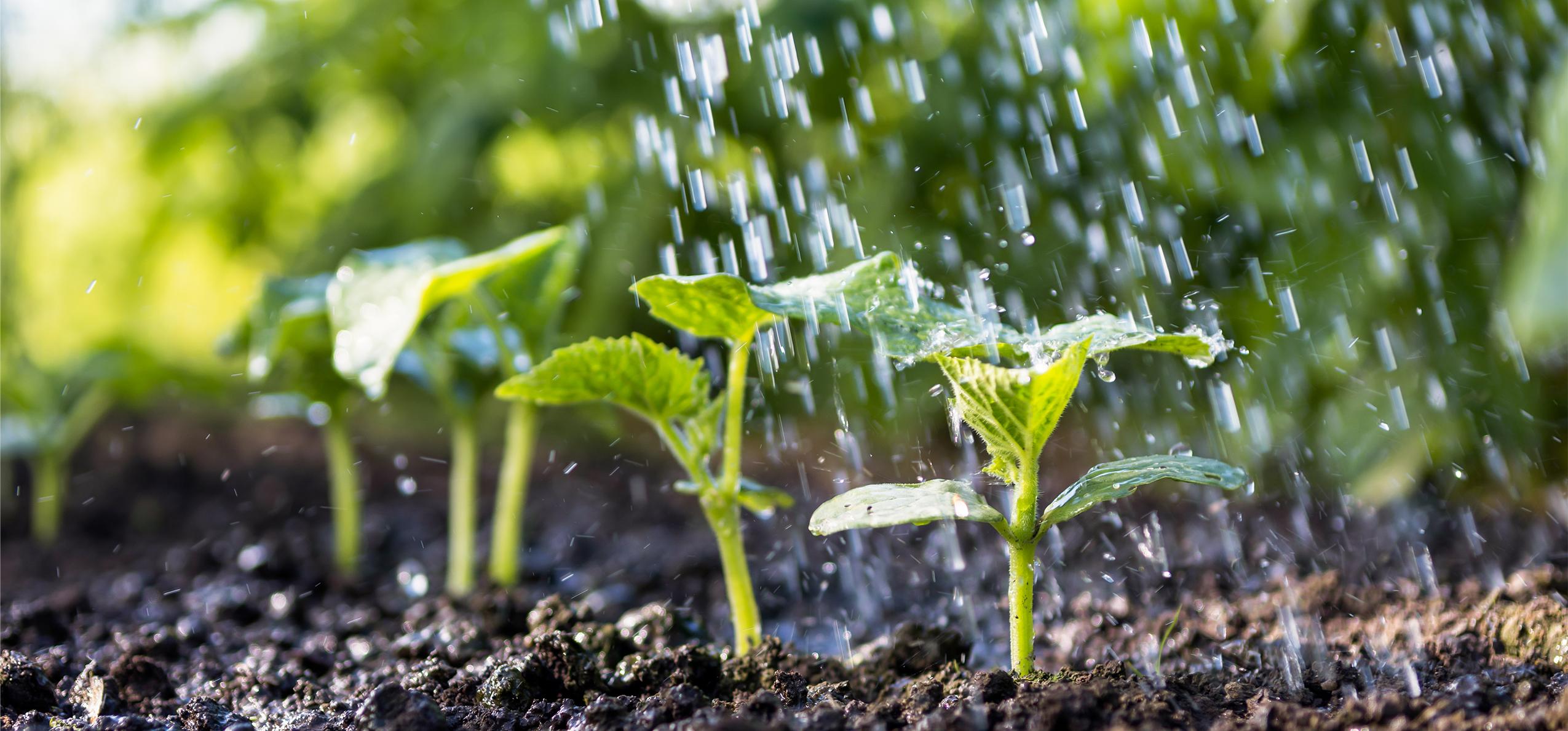 14 essential nutrients in plants