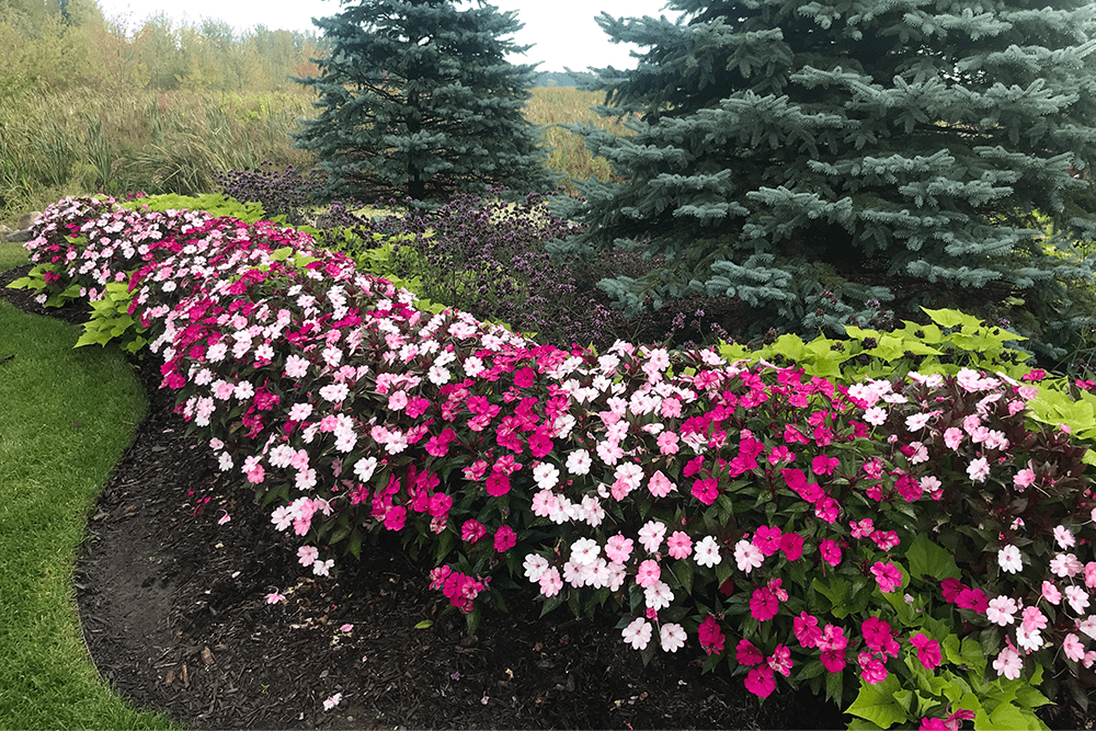 flowers after ultimate ornamental program