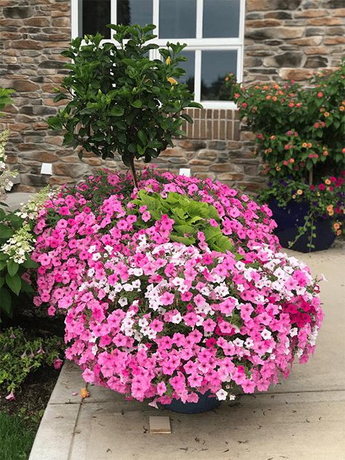 large flower pot on patio