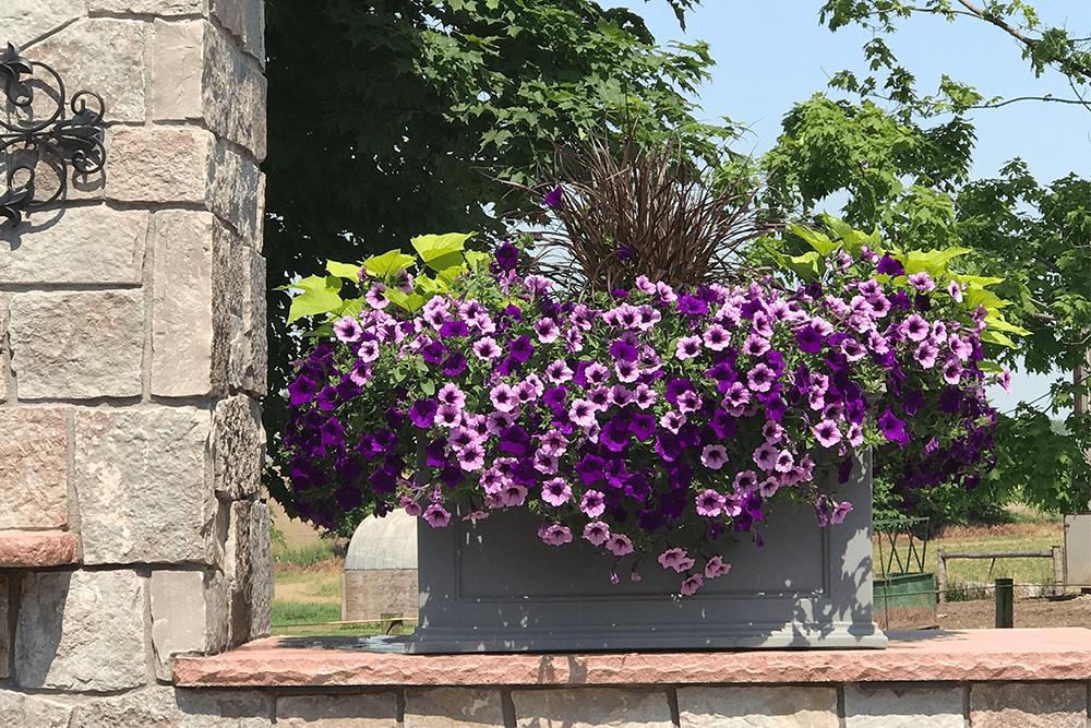 flowers on ledge