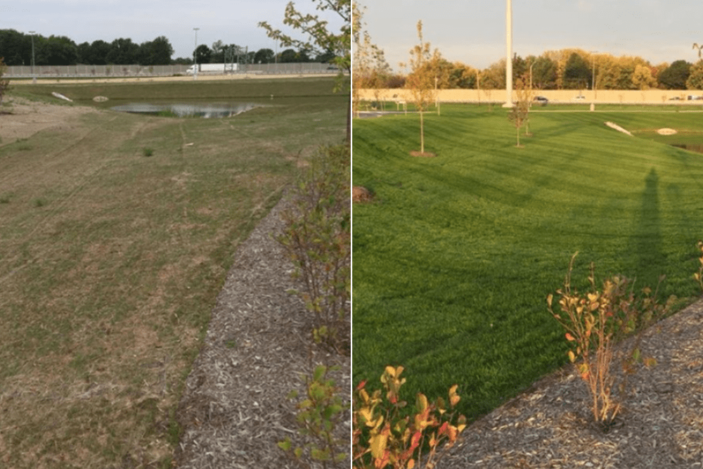 before and after foliar-pak grow-in