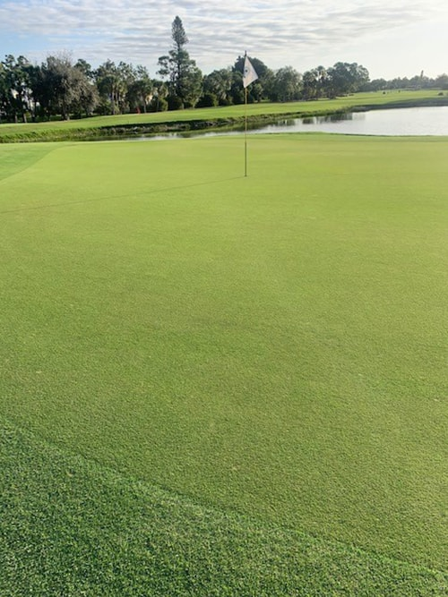 view of green and hole at cypress lake golf club